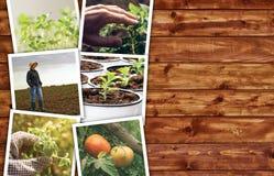 Collage della foto di agricoltura Immagini Stock