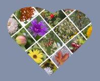 Collage della foto di autunno sotto forma di cuore Fotografia Stock