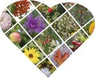 Collage della foto di autunno sotto forma di cuore Fotografie Stock