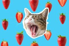 Collage della fragola e del gatto, progettazione di massima di Pop art Fondo vibrante minimo di estate immagini stock