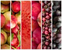 Collage della frutta - fondo dell'alimento Immagine Stock Libera da Diritti