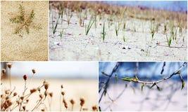 Collage della natura in anticipo della sorgente Fotografia Stock