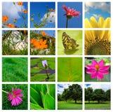 Collage della natura e della sorgente Immagine Stock Libera da Diritti