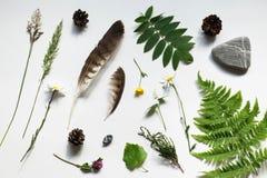 Collage della natura, oggetti dai campi e felce della foresta, trifoglio, pigna, piuma, ranuncolo, erica, erba, roccia Molla fres Fotografie Stock