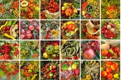 Collage della raccolta Fotografia Stock