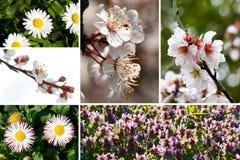 Collage della sorgente Fotografia Stock