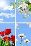 Collage della sorgente Fotografie Stock