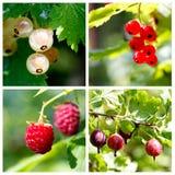 Collage delle bacche di estate Fotografie Stock