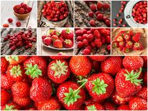 Collage delle bacche rosse miste della fragola Concetto Immagine Stock
