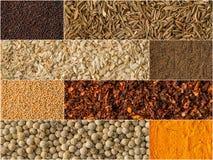 Collage delle erbe e del fondo differenti delle spezie Fotografie Stock Libere da Diritti