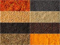 Collage delle erbe e del fondo differenti delle spezie Immagine Stock