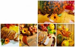 Collage delle foglie della zucca Immagine Stock