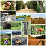Collage delle foto della natura Fotografie Stock