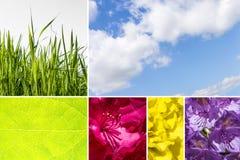Collage delle foto della natura con il cielo nuvoloso, l'erba, la foglia ed il fiore Immagini Stock