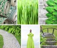 Collage delle foto nei colori verdi Immagini Stock