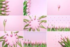 Collage delle foto rosa orizzontali dei tulipani sui precedenti rosa Immagine Stock