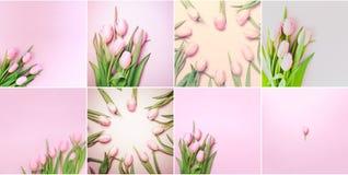 Collage delle foto rosa quadrate dei tulipani sui precedenti rosa fla Fotografia Stock