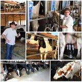 Stabilimento lattiero-caseario - collage fotografia stock libera da diritti