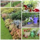 Collage delle immagini del giardino immagine stock