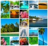 Collage delle immagini delle Maldive della spiaggia di estate - fondo di viaggio e della natura Fotografie Stock Libere da Diritti