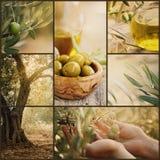 Collage delle olive Immagini Stock