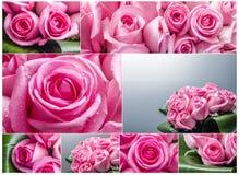 Collage delle rose Immagini Stock Libere da Diritti