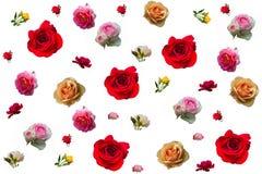 Collage delle rose Immagini Stock