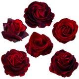 Collage delle rose rosse Fotografie Stock Libere da Diritti