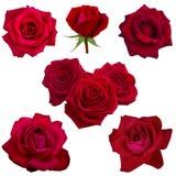 Collage delle rose rosse Fotografia Stock Libera da Diritti