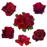 Collage delle rose rosse Fotografia Stock