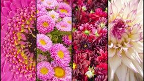 Collage delle sezioni gialle e rosa del fiore Immagine Stock Libera da Diritti