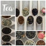 Collage delle varietà differenti e tipi di tè in cucchiai di legno Fotografia Stock Libera da Diritti