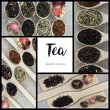 Collage delle varietà differenti e tipi di tè in cucchiai di legno Fotografie Stock Libere da Diritti