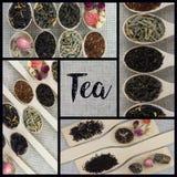 Collage delle varietà differenti e tipi di tè in cucchiai di legno Fotografia Stock