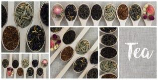 Collage delle varietà differenti e tipi di tè in cucchiai di legno Immagine Stock
