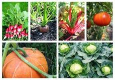 Collage delle verdure Fotografie Stock Libere da Diritti
