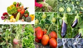 Collage delle verdure e delle frutta Fotografie Stock Libere da Diritti
