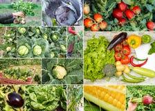Collage delle verdure e delle frutta Immagini Stock Libere da Diritti