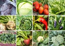 Collage delle verdure e delle frutta Immagini Stock