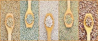 Collage der getrockneten Linsen, Erbsen, Soyabohnen, Bohnen Lizenzfreie Stockbilder