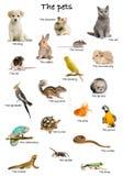 Collage der Haustiere und der Tiere auf englisch Lizenzfreie Stockfotos