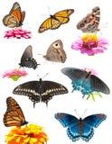 Collage der hellen, bunten Basisrecheneinheiten Lizenzfreies Stockbild