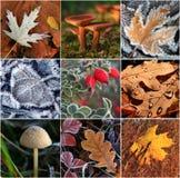 Collage der Herbstblätter Stockbild