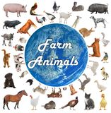 Collage des animaux de ferme illustration stock
