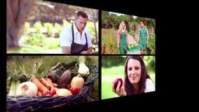 Collage des biologischen Lebensmittels stock video