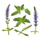 Collage des branches, des fleurs sages et des feuilles d'isolement sur le blanc Photo stock