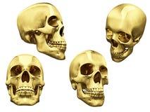 Collage des crânes d'isolement d'or Images stock