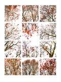 Collage des Ebereschenbaums und der ashberries stilisiert Stockbilder