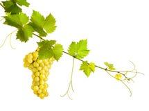 Collage des feuilles de vigne et du raisin jaune photos libres de droits