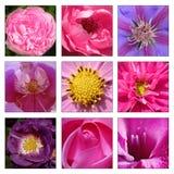 Collage des fleurs Photo libre de droits